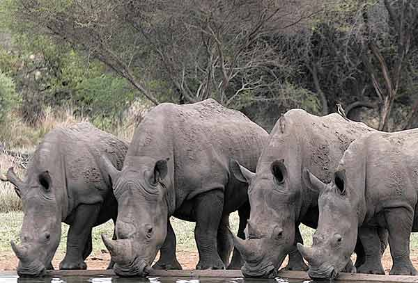 Rhino Day – How Can I help?